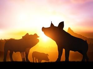 Bukan Kisah Babi Ngepet, Wanita Ini Viral Tidur Bareng Babi