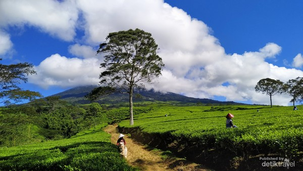 Gunung Dempo di Yogyakarta