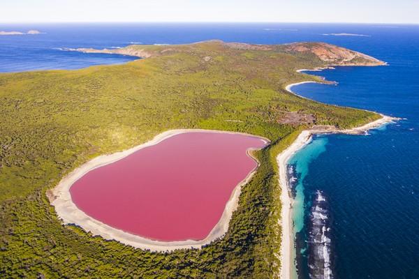 Warna merah muda ini awalnya dispekulasi berasal dari alga. Namun dalam penelitian terakhir diungkapkan bahwa kehadiran mikroba extremophille berkontribusi terhadap warna pink pada danau itu.