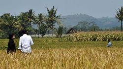 Jadi Penggerak Ekonomi, Anggaran Pertanian Diusulkan Naik
