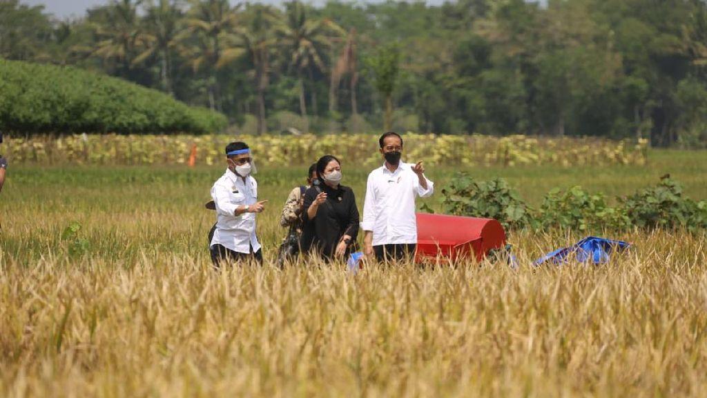 Panen Raya Memuaskan, Jokowi Sebut RI Tak Perlu Impor Beras