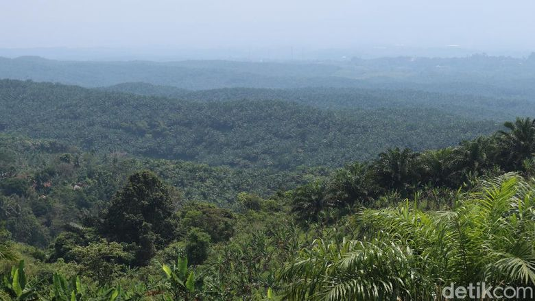 Kondisi Cikidang Plantation Resort, bakal Bukit Algoritma.