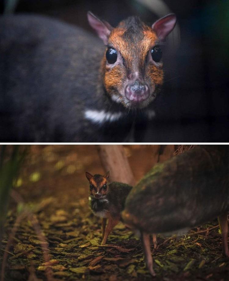 fotoinet hewan lucu dan unik