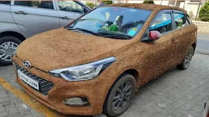 Mobil Dilumuri Kotoran Sapi