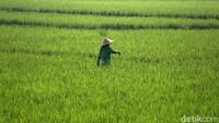 Mengenal Agree, Cara Telkom Cetak Petani Modern dan Raup Cuan