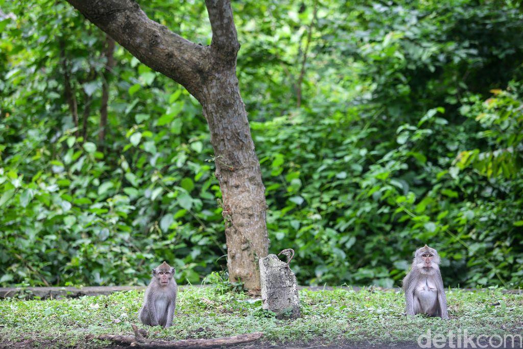 Monyet di Taman Nasional Bali Barat