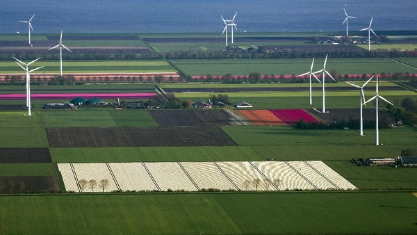 Negara kincir angin ini memang menjadi surga bagi para pencinta bunga tulip.