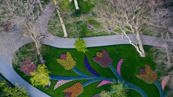 Pasalnya jika musim semi tiba, jutaan bunga tulip berwarna-warni bermekaran dengan indahnya.