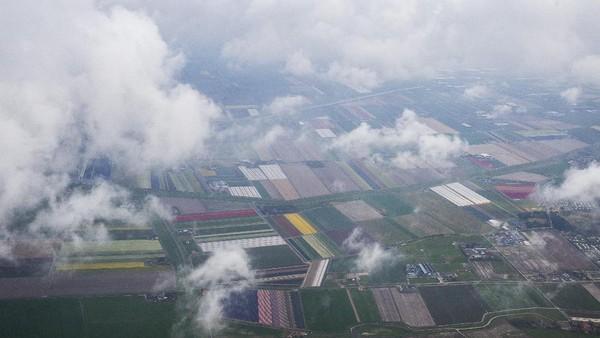 Salah satu tempat terbaik melihat tulip adalah di ladang Den Helder.