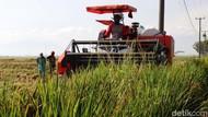 BPS Catat Ekspor Pertanian Januari-Mei 2021 Naik 13,39%