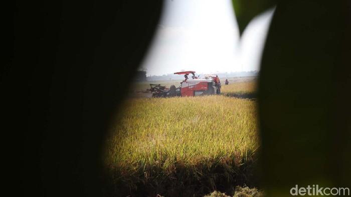 Petani Bojongemas, Solokanjeruk, Kabupaten Bandung, kini tengah panen padi. Mereka menggunakan alat mesin pertanian (Alsintan) untuk memanen padi.