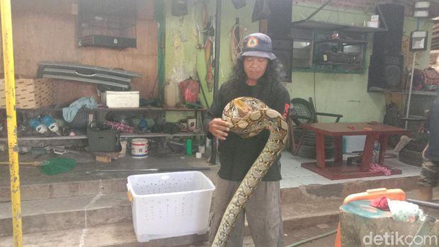 Relawan BPBD Kudus menunjukan ular piton sepanjang 4 meter yang berhasil diamankan dari permukiman warga Kudus, Rabu (5/5/2021).