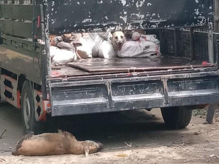 78 ekor anjing yang diamankan Polres Kulon Progo