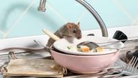 Demi Uang, 5 Orang Ini Masukkan Tikus hingga Rambut Kemaluan di Makanan