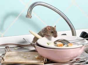 5 Bahan Alami Mengusir Usir Tikus yang Ampuh, Kopi hingga Kulit Telur