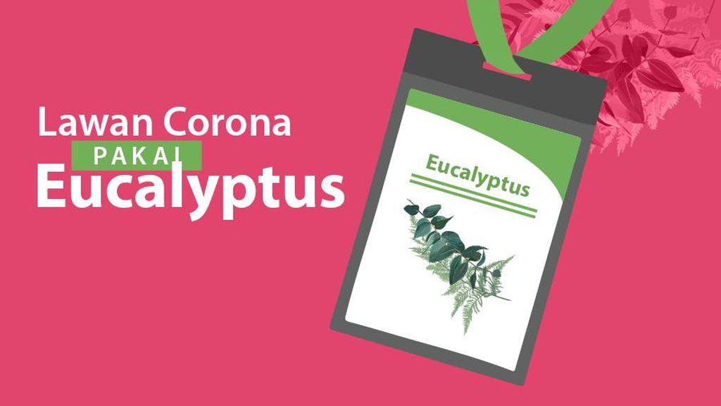 Lawan Corona Pakai Eucalyptus
