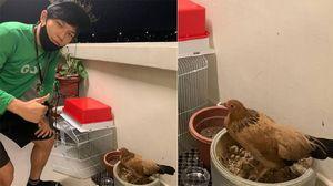 5 Tugas Aneh Pengantar Makanan, Taruh Ayam di Kandang hingga Gambar Dinosaurus!