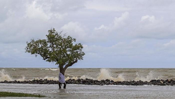 Sebuah pohon bakau berdiri di sekitar pantai desa Eretan Kulon, Kandanghaur, Indramayu, Jawa Barat.