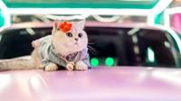 Kenalan dengan Mao Mao, Model Kucing Berpenghasilan Hingga Rp 88 Juta Sebulan
