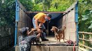 Pelaku Penyelundupan Anjing untuk Konsumsi Jalani Sidang Perdana di Kulon Progo
