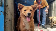 Nasib 67 Anjing yang Gagal Diselundupkan Gegara Penyekatan Pemudik