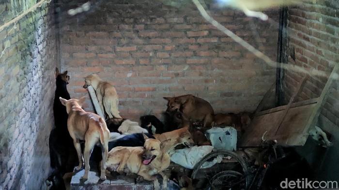 Puluhan anjing gagal diselundupkan gegara pemeriksaan pos penyekatan pemudik di Temon, Kulon Progo, DIY. Total ada 67 anjing yang kini dievakuasi ke shelter.