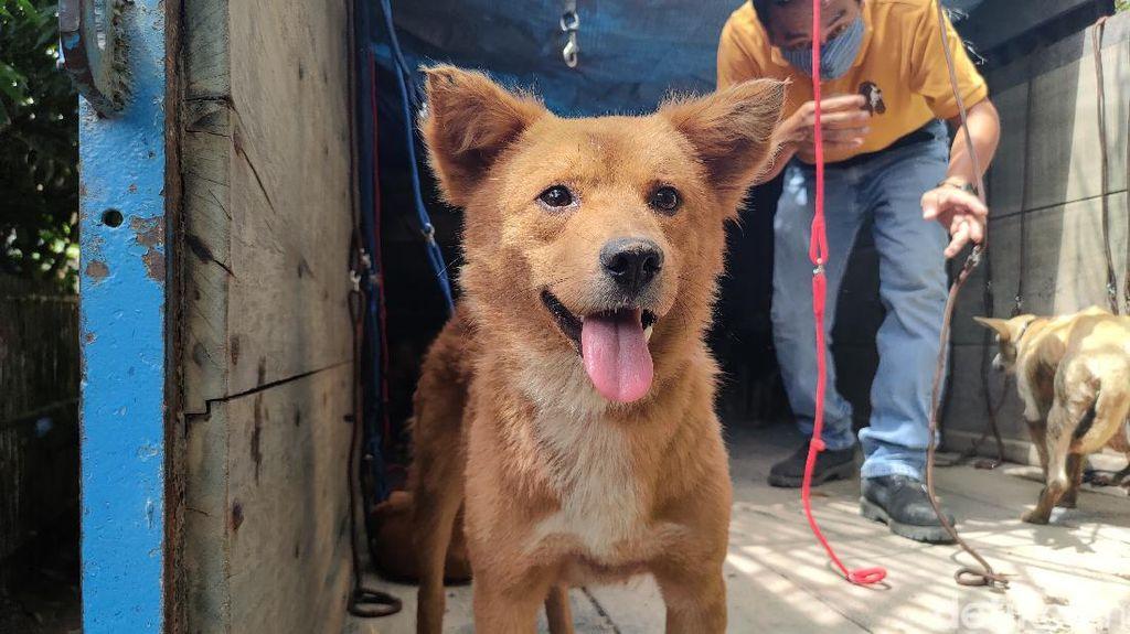 67 Anjing yang Gagal Diselundupkan karena Pos Penyekatan Dievakuasi
