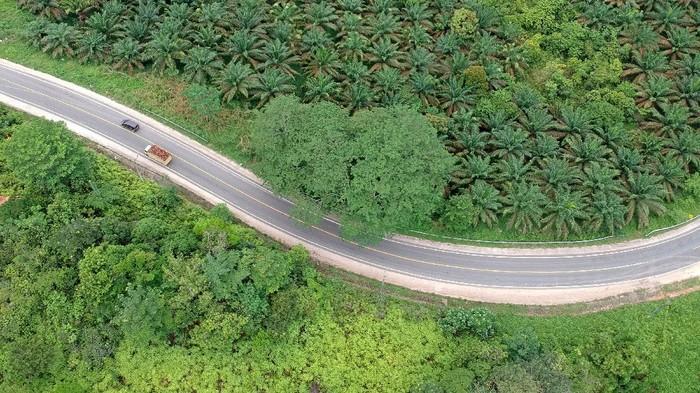 Kendaraan melintas di Jalan Lintas Timur Sumatera, Sekernan, Muarojambi, Jambi, Sabtu (8/5/2021). Pada hari ketiga pemberlakuan larangan mudik Lebaran 2021, lalu lintas kendaraan pribadi di jalan penghubung Provinsi Jambi dengan Riau tersebut terpantau sepi dan hanya didominasi kendaraan angkutan barang. ANTARA FOTO/Wahdi Septiawan/rwa.