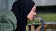 Kenalin, Icha Si Gadis Penakluk King Cobra