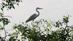 Melihat Lagi Ragam Spesies Burung di Perairan Jakarta