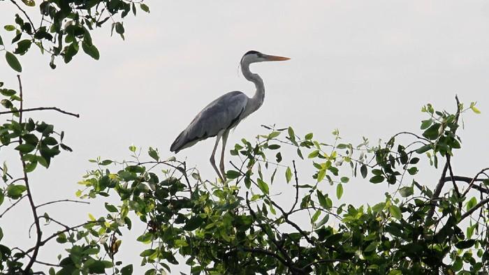 Memperingati Hari Migrasi burung Sedunia, Biodiversity Warriors Yayasan KEHATI menggelar aktivitas pengamatan burung di perairan Jakarta.