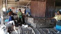 Jelang Lebaran Harga Ayam Potong Malah Turun Rp 2.000