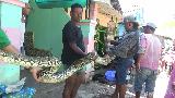 Warga Lumajang Tangkap Ular Sanca 3,5 Meter Pemangsa Ternak Ayam