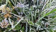 Embun Es Kembali Selimuti Dataran Tinggi Dieng