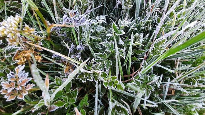 Dataran tinggi Dieng kembali membeku, Senin (10/5/2021) pagi. Embun es di Dieng pertama di tahun 2021 ini terlihat tebal di kompleks Candi Arjuna.