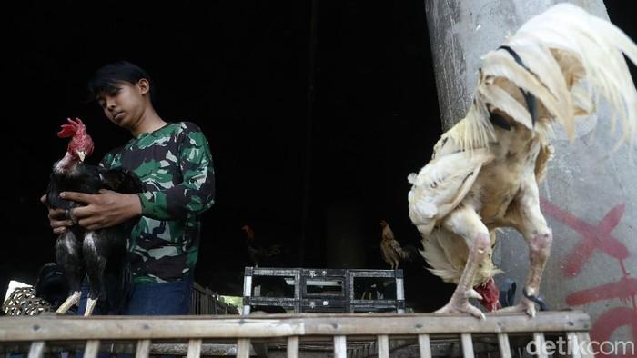 Menjelang perayaan Idul Fitri 1442 Hijriah, para pedagang ayam dan entok mulai memadati pasar Tradisional Cileungsi, Kabupaten Bogor, Senin (10/05/2021).
