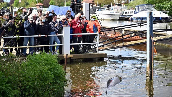 There are concerns that the whale could be injured Glyn KIRK AFP