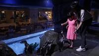 Jakarta Aquarium Buka Saat Libur Lebaran, Kapasitas Maksimal 30%