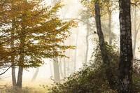 Jawara German Society for Nature Photography