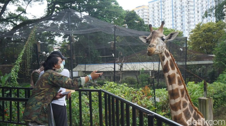 Kebun Binatang Bandung (Bandung Zoological Garden) memutuskan akan tetap dibuka saat perayaan Hari Raya Idul Fitri. Marcom Bandung Zoo Sulhan Syafii mengatakan, pihaknya sudah bersiap diri untuk menerima wisatawan dengan protokol kesehatan yang ketat.
