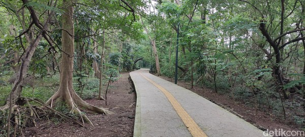Hutan Kota Srengseng Jakarta Barat seluas 13 hektar ini memiliki pedestrian yang sangat baik.