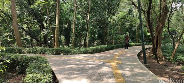 Kesan pertama kami saat memasuki Hutan Kota Srengseng adalah pepohonan di hutan mini ini begitu rapat.