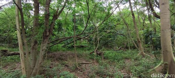Bak hutan sebenarnya, kanan kiri jalan adalah pepohonan tua yang diselingi tumbuhan-tumbuhan kecil.