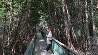 Kawasan Ekowisata Mangrove PIK, Cocok Banget Buat Wisata Luar Ruang