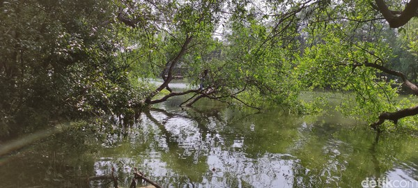 Bahkan, traveler juga ada yang memanjat pohon untuk berfoto di atas danau Kawasan Ekowisata Mangrove PIK.