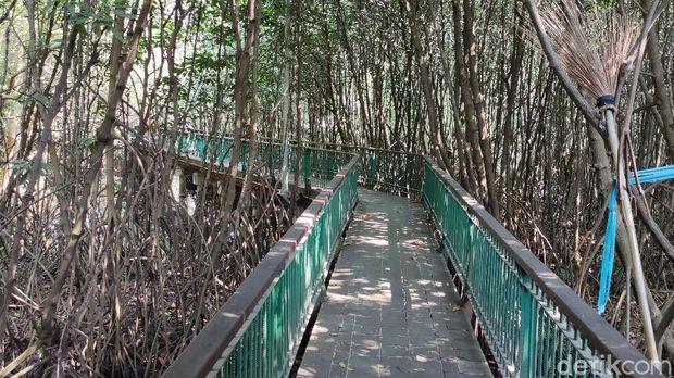 Kawasan Ekowisata Mangrove PIK