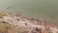 Tumpukan Mayat di Sungai Gangga India Picu Kepanikan Warga