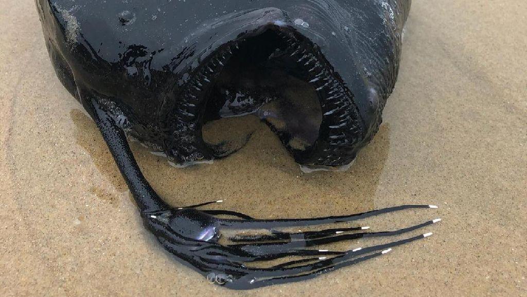 Viral di Facebook, Ikan Monster Ditemukan di California