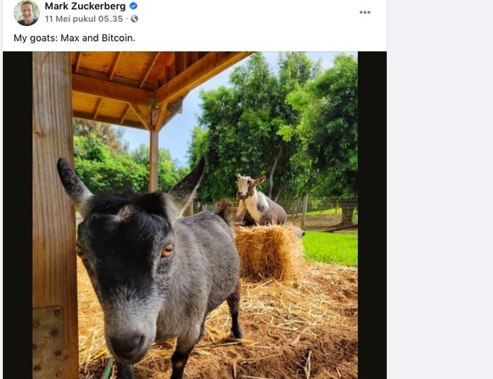 Kambing Mark Zuckerberg