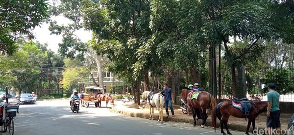 Kuda-kuda yang ada di Taman Cilaki ini berasal dari Lembang. Ada puluhan kuda asal Lembang yang siap ditunggangi pengunjung.